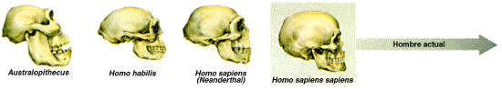 Prehistory: human evolution