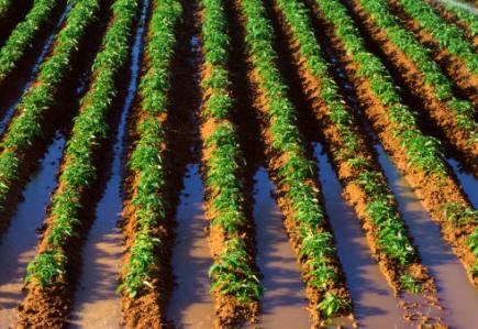 A causa de la labranza constante, Los cultivos intensivos eliminan paulatinamente y por lixiviación las reservas de materia orgánica del suelo
