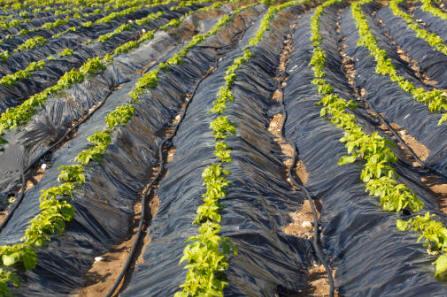 Tipos de plasticos utilizados en la agricultura