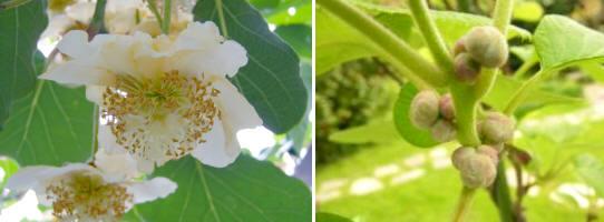 Agricultura reproducci n m todos 4 parte for Ejemplos de plantas ornamentales