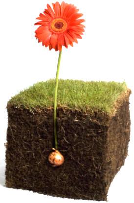 es fundamental conocer las necesidades de cada planta para as la textura del
