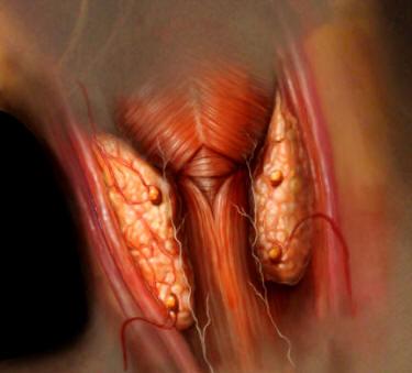 ANATOMÍA HUMANA - FUNCIONES RELACIÓN: El sistema endocrino - 2ª parte