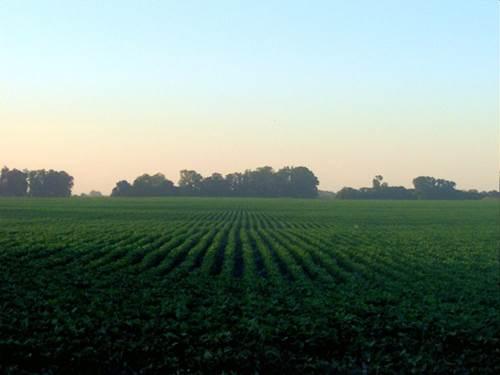 Sembrado de soja de agricultura intensiva en Argentina. Imagen Wikimedia Commons