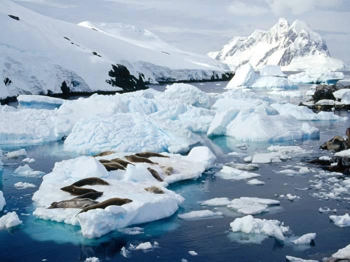 Especies endémicas - Continente Antártico