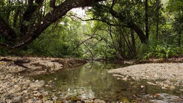 Paisaje de la selva tropical de Java