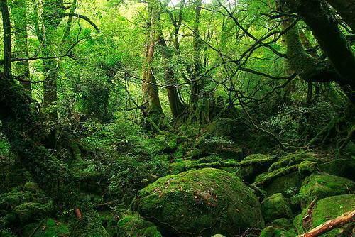 Las asociaciones est n formadas por grupos de vegetales - Mas goy fornells de la selva ...