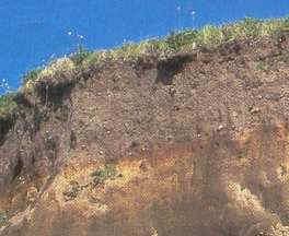 Ecolog a general el suelo textura y estructura for Partes del suelo