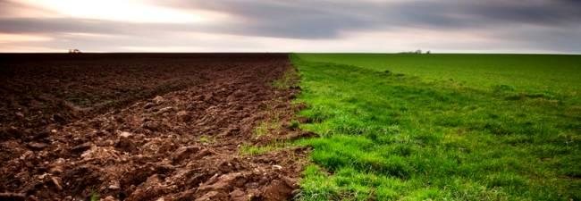 El mundo cient fico nutrientes del suelo for Suelos de hormigon para jardin