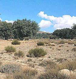 Geograf a f sica la vegetaci n 5 parte for Clima mediterraneo de interior