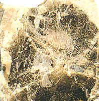 La mica tiene la propiedad de exfoliación en hojas muy delgadas