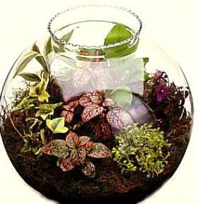 Peque o jard n dentro de una pecera redonda for Peceras de jardin