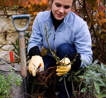 Jardiner a cultivos los rosales 2 parte for Jardineria rosales
