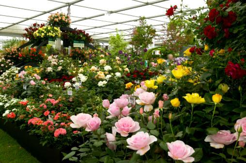 Jardiner a cultivos los rosales 1 parte for Jardineria rosales