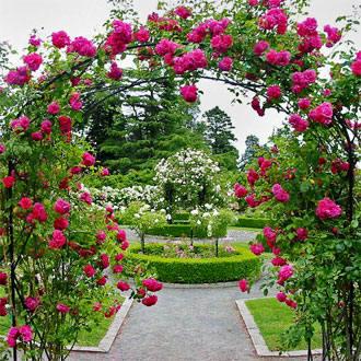 Rosales trepadores for Jardin los rosales