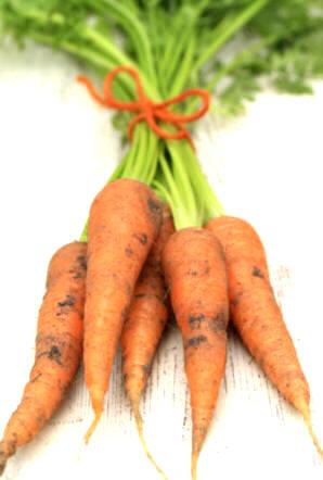 Plantas Medicinales Especies Y Propiedades Zanahoria Daucus Carota La zanahoria gusta de espacios profundos de tierra, un limo arenoso es ideal para ella. propiedades zanahoria daucus carota