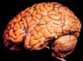 NEUROCIENCIAS: LA CIENCIA DEL CEREBRO