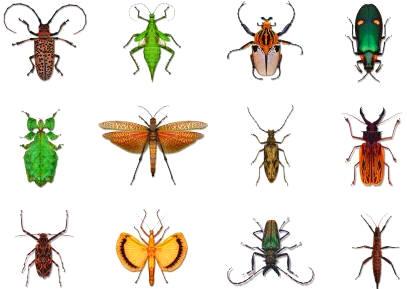 Zoolog a invertebrados insectos 1 parte - Insectos en casa fotos ...